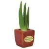 Aloe Vera with Ceramic Vases