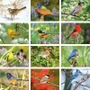 Nature's Song Birds Calendar